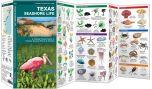Texas Seashore Life (Pocket Naturalist® Guide)