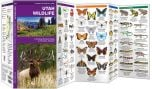 Utah Wildlife (Pocket Naturalist® Guide)