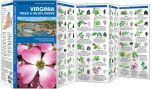 Virginia Trees & Wildflowers (Pocket Naturalist® Guide)