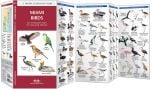 Miami Birds (Pocket Naturalist® Guide)