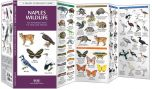 Naples Wildlife (Pocket Naturalist® Guide)