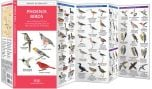 Phoenix Birds (Pocket Naturalist® Guide)