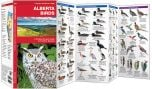 Alberta Birds, 2nd Edition (Pocket Naturalist® Guide)