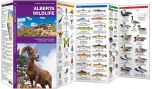 Alberta Wildlife, 2nd Edition (Pocket Naturalist® Guide)