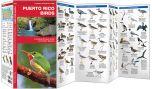 Puerto Rico Birds (Pocket Naturalist® Guide)