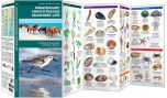Assateague/Chincoteague Seashore Life (Pocket Naturalist® Guide)