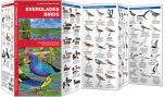 Everglades Birds (Pocket Naturalist® Guide)