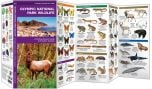 Olympic National Park Wildlife (Pocket Naturalist® Guide)