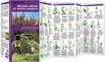 Invasive Weeds of North America (Pocket Naturalist® Guide)