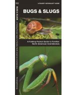 Bugs & Slugs, 2nd Edition: A Folding Pocket Guide to Familiar North American Invertebrates (Pocket Naturalist® Guide)