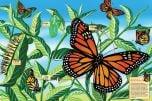 Life Cycle Floor Puzzle: Monarch