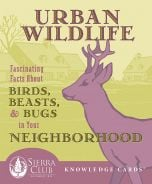 Urban Wildlife: Fascinating Facts About Birds, Beasts, and Bugs in Your Neighborhood (Knowledge Cards®)