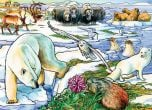 Arctic Adventure (35-Piece Tray Puzzle)