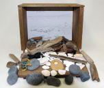 Seashore Diorama (Create-A-Scene® Habitat Diorama Kit)