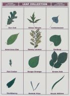 Leaf Collection Poster Board Display