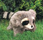Raccoon Puppet, Young