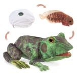 Frog Life Cycle Puppet