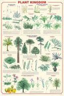 Plant Kingdom (Laminated Poster)