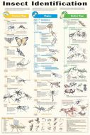 Insect Identification (Laminated Poster)