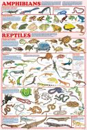 Amphibians & Reptiles (Laminated Poster)