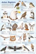 Avian Raptors (Laminated Poster)
