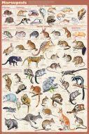 Marsupials (Laminated Poster)