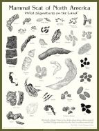 Mammal Scat of North America Poster: Wild Signatures on the Land