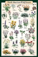 North American Wildflowers (Laminated Poster)