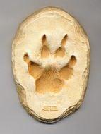 Coyote Track Cast (Small Plaque)