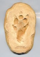 Armadillo Track Cast (Small Plaque)