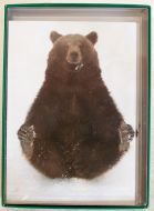 Eurasian Bear Holiday Boxed Notes