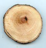 Oak (Coast Live) Tree Round