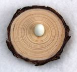 Natural Pine Egg Stand (Extra Small)