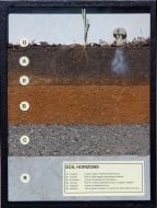 Soil Horizons Display
