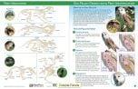 Owl Pellet & Prey Visual ID Guide