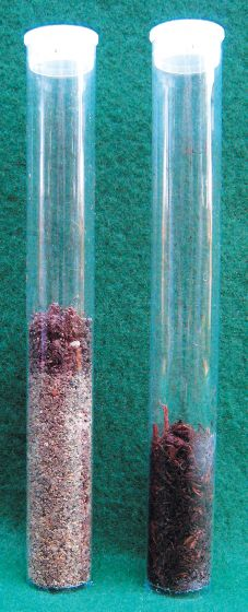 Soil Profile Tubes (Clear Plastic)