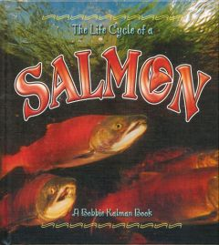 Life Cycle of a Salmon