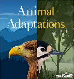 Animal Adaptations (NSTA Kids)