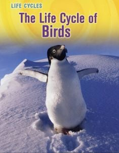 Life Cycle of Birds, The (Animal Class Life Cycle Series)