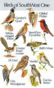 Southwestern Birds #1 (Birdsong IdentiFlyer™ Card)