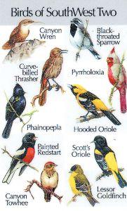 Southwestern Birds #2 (Birdsong IdentiFlyer™ Card)