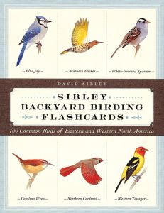 Sibley Backyard  Birding Flash Cards: 100 Common Birds Of Eastern And Western North America
