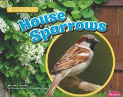 House Sparrows (Backyard Bird Series)