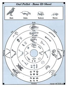 Owl Pellet Bone Chart for Sorting (15 Sheets)