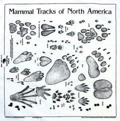 Ecru (Natural Cotton) Track Scarf (Acorn Naturalists' Identification Bandana)