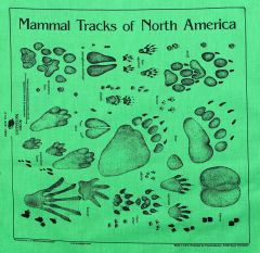 Lime Green Track Scarf (Acorn Naturalists' Identification Bandana)
