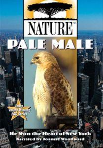 Pale Male (DVD)