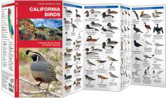 California Birds (Pocket Naturalist® Guide)