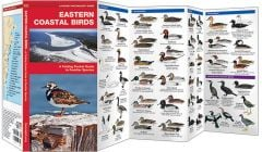 Eastern Coastal Birds (Pocket Naturalist® Guide)
