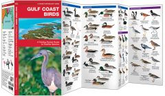 Gulf Coast Birds (Pocket Naturalist® Guide)